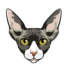 sphynx cat face cartoon vector image