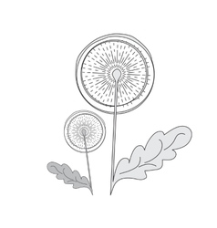 Dandelion hand drawn picture vector