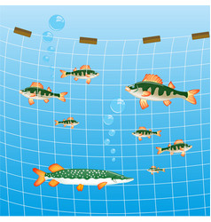 Fishing network and fish river vector