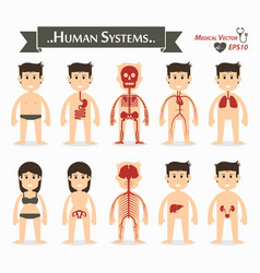 human systems flat design vector image