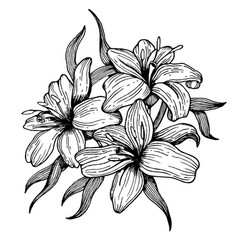 Lily flower engraving style vector
