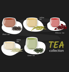 Types tea in glass cups vector