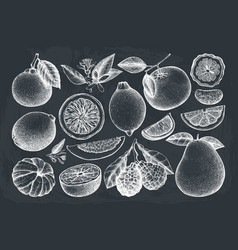 vintage citrus fruits collection vector image