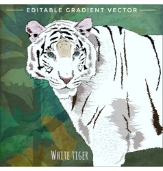 Wild Cats White Tiger vector