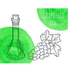 Hand drawn grape seed oil bottle with green vector