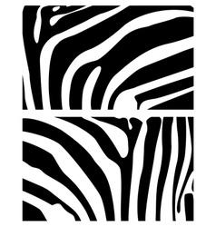 background zebra vector image