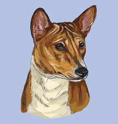 basenji colorful hand drawing portrait vector image