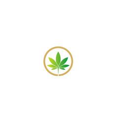 Cannabis herb medic green leaf logo vector