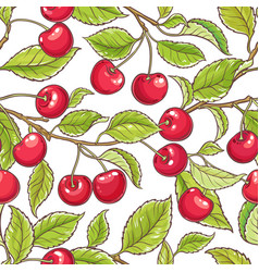 cherry branch pattern vector image