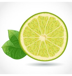Fresh juicy piece of lime isolated on white vector