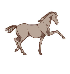 horse hand drawn vector image
