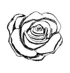 Monochrome sketch of rose flower vector
