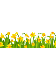 Narcissus border vector
