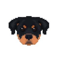 Rottweiler head in pixel art style dog vector
