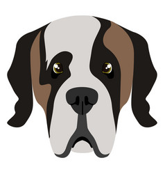 saint bernard avatar vector image
