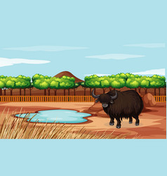 Scene with buffalo in field vector