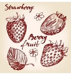 Strawberry set hand drawn vector image vector image