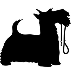 scotty dog and leash thm vector image vector image
