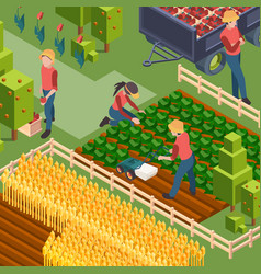 farmers harvest isometric people working on field vector image