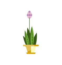 flowering house plant indoor flower in pot vector image