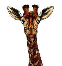 Giraffe head realistic full color sketch sketch vector