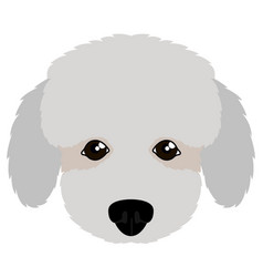 isolated poodle avatar vector image