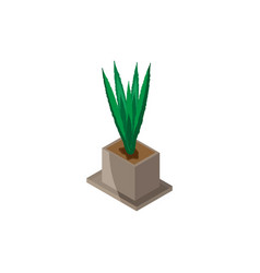 isometric of indoor plant in flower vector image