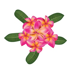 Plumeria with leaves vector