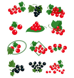 red and black currants vector image
