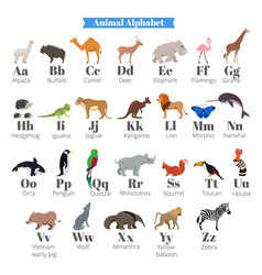 english alphabet for kids with cute wild vector image