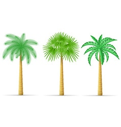 palm tree 16 vector image vector image