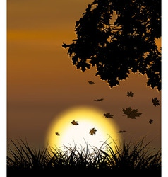 Autumn sunset background with falling maple leaves vector image vector image