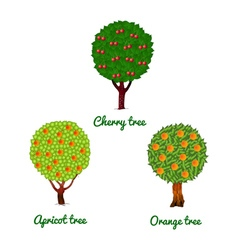 Fruit trees cherry apricot and orange vector