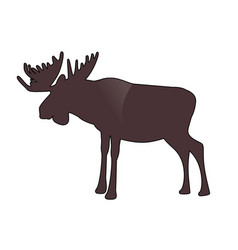 moose or elk with big horns isolated on white vector image