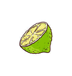 sketch cartoon juicy half of ripe lemon vector image