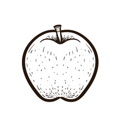 sketch fruit apple isolated coloring book vector image
