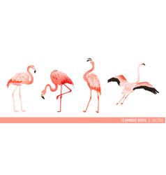 tropical flamingo collection exotic birds design vector image