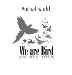 animal world we are bird gray birds background vec vector image