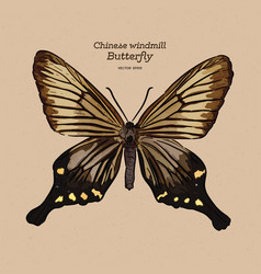 Chinese windmill is a butterfly family vector