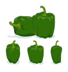 Green bell peppersweet pepper or capsicum vector image