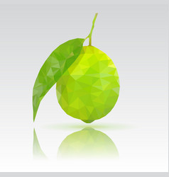 Lime with leaf polygonal vector
