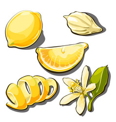 whole ripe yellow lemon peel slice seed and vector image