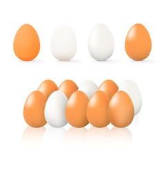 brown and white egg vector image