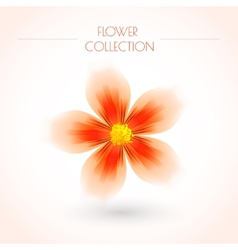 Colorful Flower Isolated on White vector image