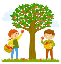 apple picking vector image