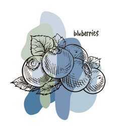 Blueberry hand drawn vector
