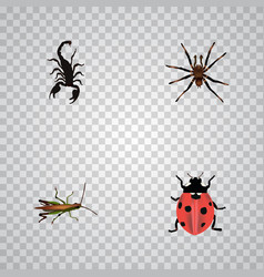 Realistic arachnid poisonous locust and other vector