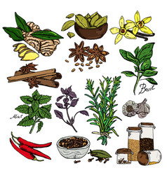 background with hand drawn sketch spices vector image