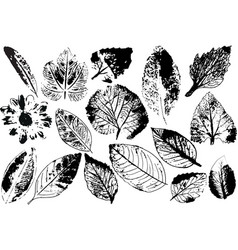 branches and leaveshand drawn floral vector image