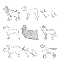Collection of breeds dog in line vector